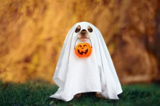 What do mummies like listening to on Halloween? Wrap music! #HappyHalloween https://t.co/4Auysgj6A7