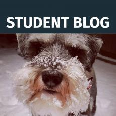 Student Blog - Countdown to Christmas